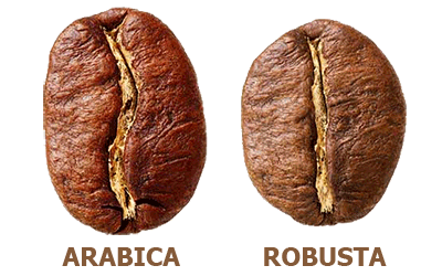 coffee beans,arabica coffee bean,robusta coffee bean,coffee bean types,coffee,gourmet,flavored coffee